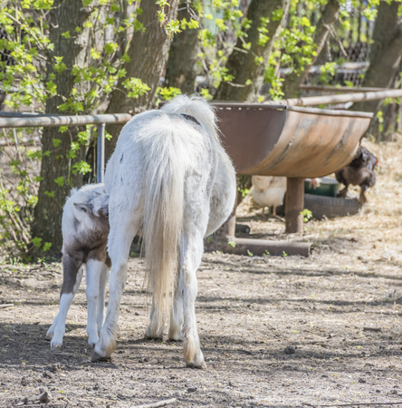 sucks: Pony Hatchling sucks mothers udder