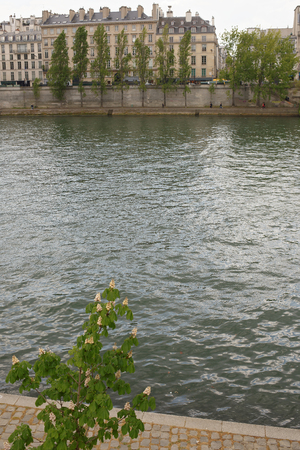In Paris chestnuts are blooming. View of the Anatol  France quay