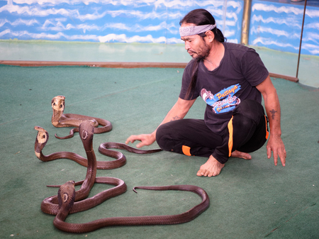 Pattaya,Thailand- November 20,2017: Show of snakes.Performer play with cobra during a show in Pattaya Snake Show