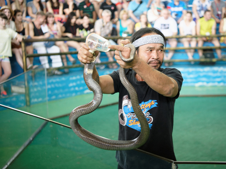 Pattaya,Thailand- November 20,2017: Show of snakes. Performer play with cobra during a show in Pattaya Snake Show.Collection of poison