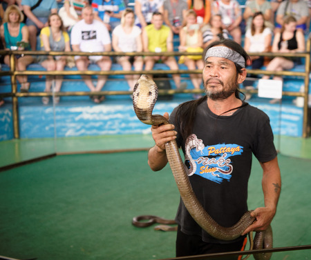 Pattaya,Thailand- November 20,2017: Show of snakes. Performer play with cobra during a show in Pattaya Snake Show Editorial