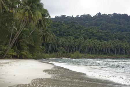 Coconut palms on the paradise coconut island