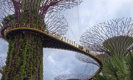 Singapore, Singapore- August 07, 2018: The OCBC Skyway trail passes at a height between two super-trees. On the trail are tourists