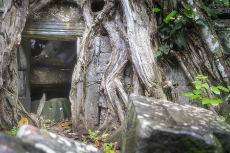 Та Prohm is the largest temple, it rains in the rainy season.  Restorers spared banyan trees with their aerial roots. The preserved symbiosis of stone and wood allows us to see Ta Prohm in this form.