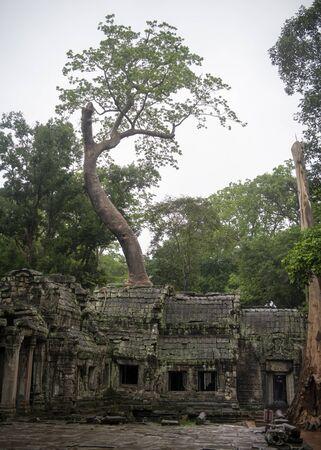 Ð ¢ Ð ° Prohm es el templo más grande, llueve en la temporada de lluvias. Los restauradores salvaron a los banianos con sus raíces aéreas. La simbiosis conservada de piedra y madera nos permite ver Ta Prohm en esta forma.