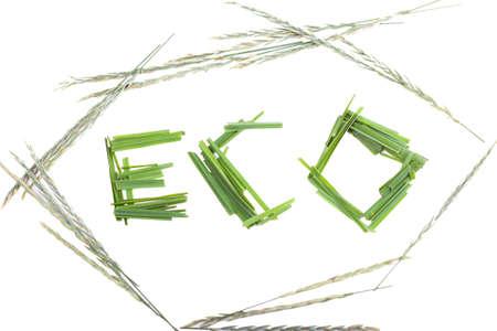 unusual word inscription Eco