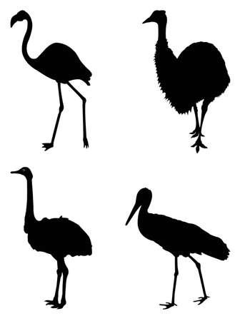 vector illustration of various birds silhouette Vector Illustratie