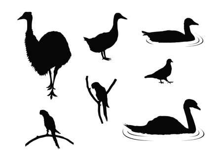 vector illustration of various birds silhouette
