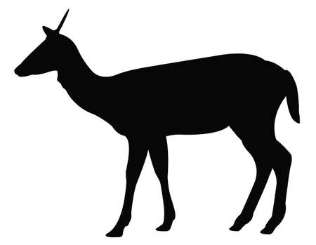 vector illustration of doe silhouette