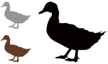 vector illustration of black duck silhouette Illusztráció