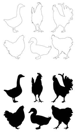 vector illustration of set of poultry birds silhouette Illusztráció