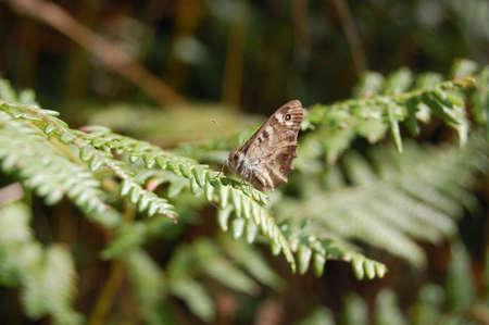 Beutiful butterfly ona green branch