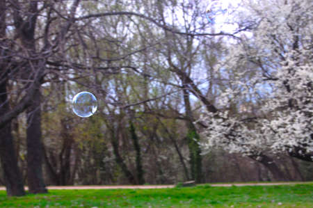 Soap Bubbles  Balloons on spring background