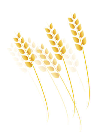 barley field: Field of Wheat, Barley or Rye Vector Illustration Illustration