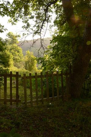 Beautiful Wooden Fence Door and Trees