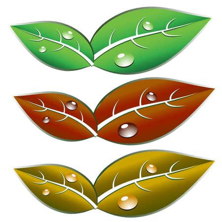 leaf: Leaf Illustration Illustration