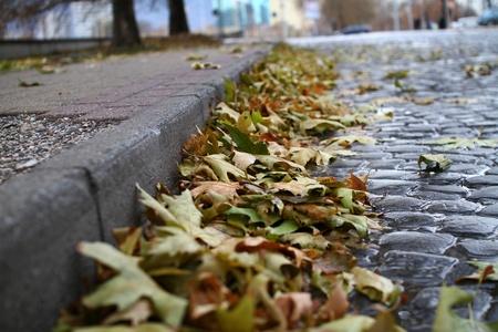 Herbstblatt Lizenzfreie Bilder