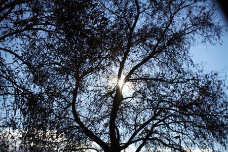 Sonnenstrahl Lizenzfreie Bilder