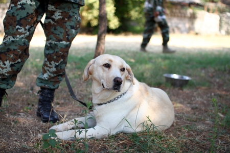 character traits: army dog