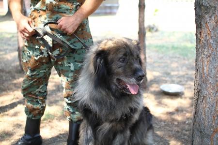 Armee Hund Lizenzfreie Bilder