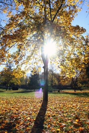 sunlight autumn tree