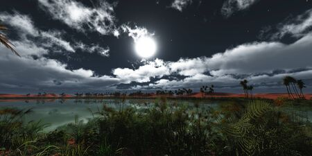 oasis at night