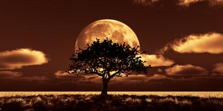 tree night full moon