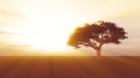 tree in the meadow sunset