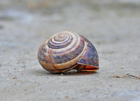 snail house on a rock