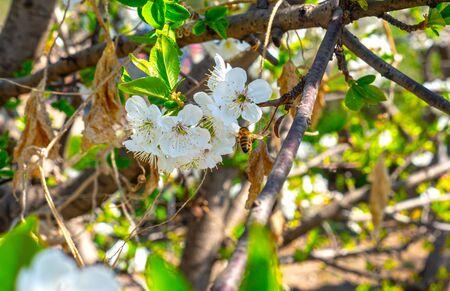 beautify spring flowers on tree
