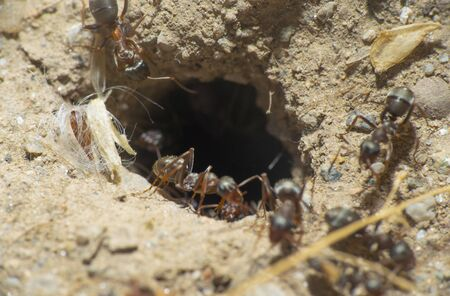 ants in a nest hole