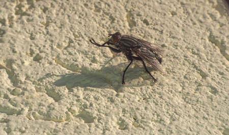 fly sits on a stone wall in sunny day Zdjęcie Seryjne