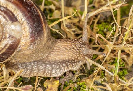 snail close up in the garden macro 版權商用圖片