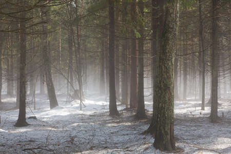 Early spring in forest with mist over melting snow layer photo