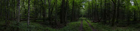 Forest ground road in sumer panorama in cloudy weather midday, Bialowieza forest, Poland, Europe 스톡 콘텐츠