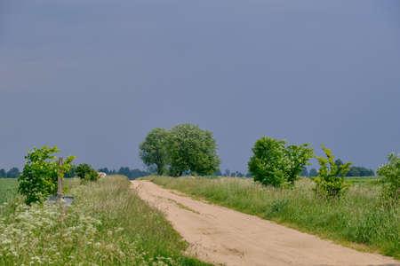 Feldweg Kreuzung mit alten Weidenbaum neben unter blauem Himmel, Podlachien, Polen, Europa, Standard-Bild