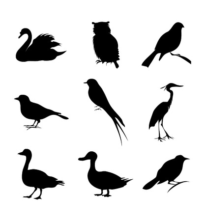 Bird of different kinds. A vector illustration.