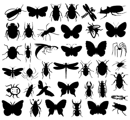 Silhouettes of insects of black colour