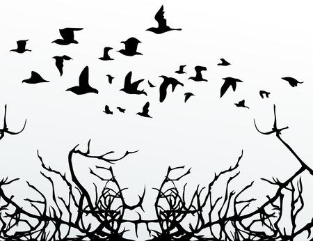 The flight of birds flies over wood.