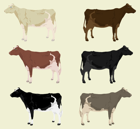 domestic cattle: Some cows on a farm of different colouring. A vector illustration Illustration