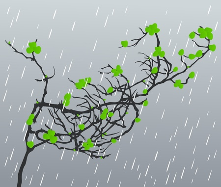 Branch with leafs against a rain. A vector illustration Vector