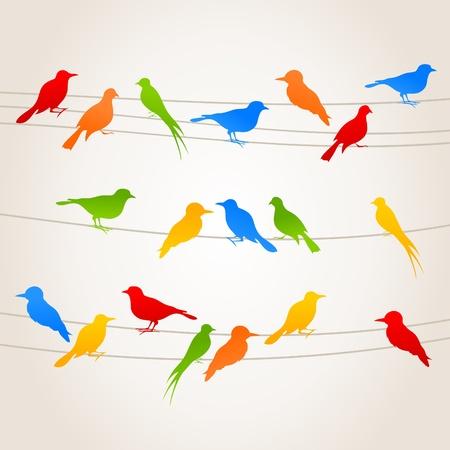 golondrina: Aves sentarse en los cables