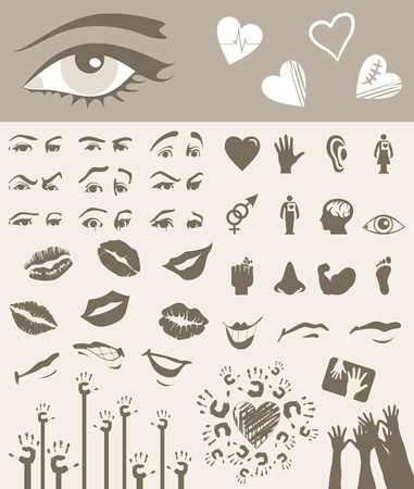 eyebrow: Collection of parts of a body. A vector illustration