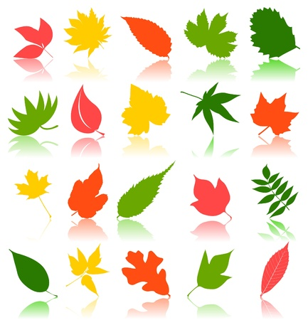 Leaf from trees of different colour.  Stock Vector - 10267687