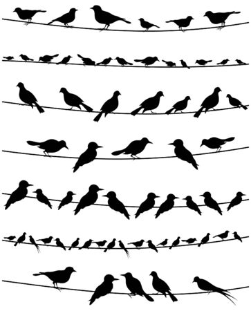 Set of birds on wires. A vector illustration Vector