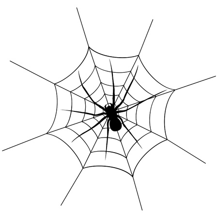 spider web: The spider weighs on a web  A vector illustration Illustration