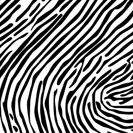 Structure from a skin of a zebra  A vector illustration Vector