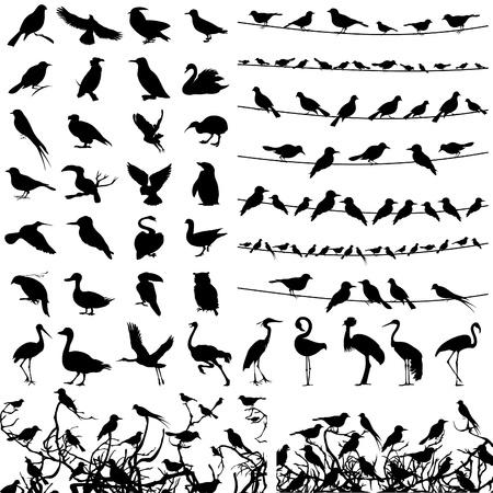 veréb: Gyűjtemény sziluettek madarak vektoros illusztráció