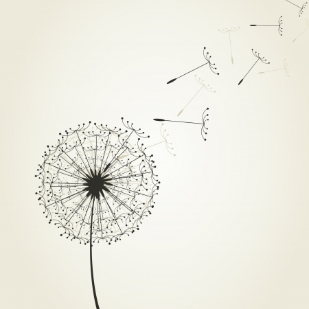 From a dandelion seeds fly. A vector illustration Vector