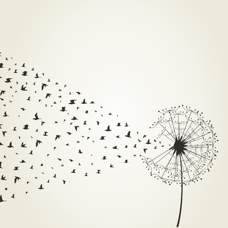 dandelion flower: From a dandelion birds take off  A vector illustration Illustration
